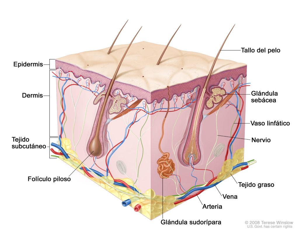dermatitis por radioterapia